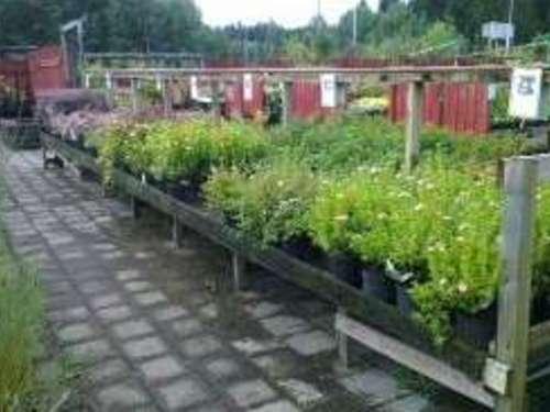 Eriksbergs Plantskola